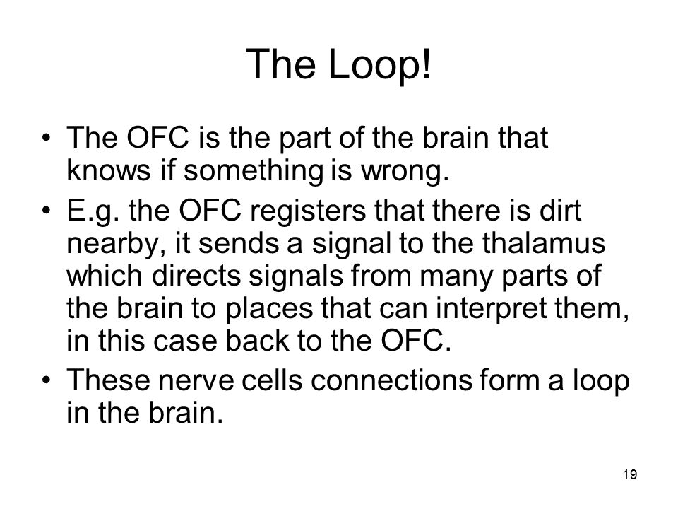 19 The Loop! The OFC is the part of the brain that knows if something is wrong. E.g. the OFC registers that there is dirt nearby, it sends a signal to
