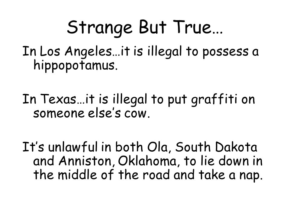 Strange But True… In Los Angeles…it is illegal to possess a hippopotamus. In Texas…it is illegal to put graffiti on someone else's cow. It's unlawful