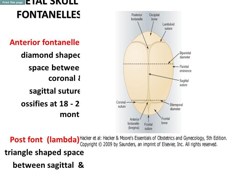 FETAL SKULL FONTANELLES Anterior fontanelle : diamond shaped space between coronal & sagittal suture, ossifies at 18 - 20 month Post font (lambda) : t