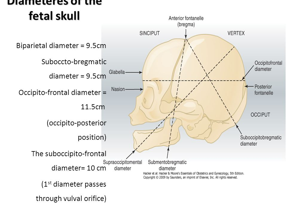 Diameteres of the fetal skull Biparietal diameter = 9.5cm Suboccto-bregmatic diameter = 9.5cm Occipito-frontal diameter = 11.5cm (occipito-posterior p