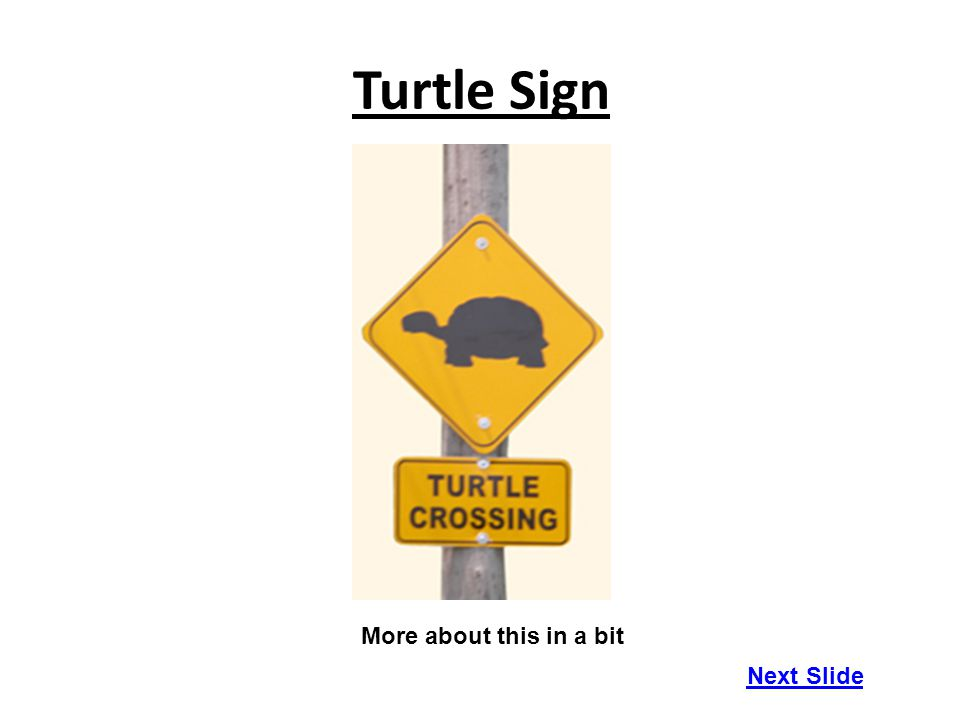 Turtle Sign Next Slide More about this in a bit