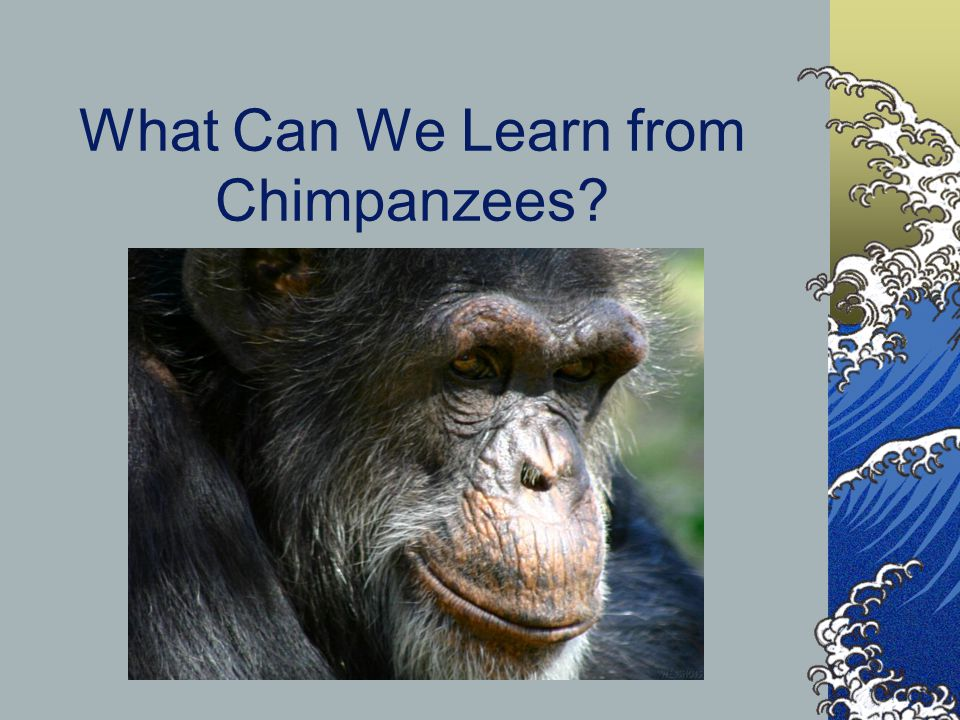 What Can We Learn from Chimpanzees