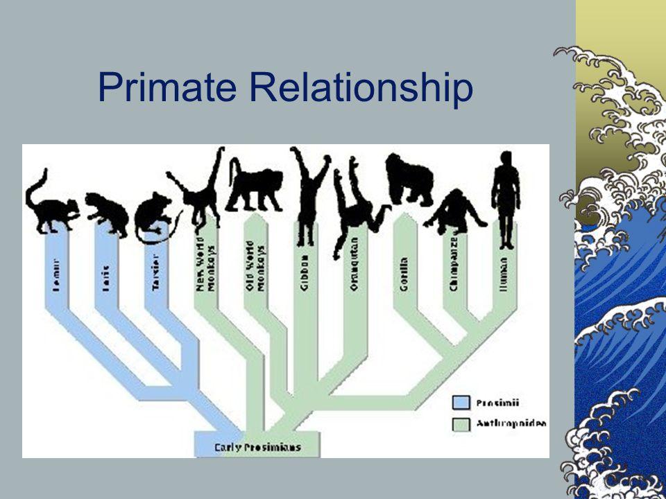Primate Relationship