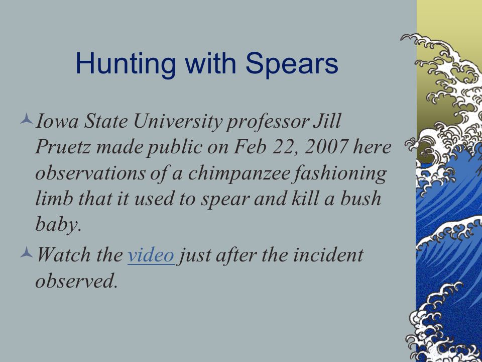 Hunting with Spears Iowa State University professor Jill Pruetz made public on Feb 22, 2007 here observations of a chimpanzee fashioning limb that it used to spear and kill a bush baby.