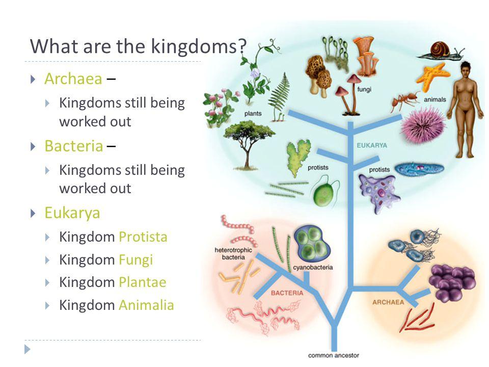 What are the kingdoms?  Archaea –  Kingdoms still being worked out  Bacteria –  Kingdoms still being worked out  Eukarya  Kingdom Protista  Kin