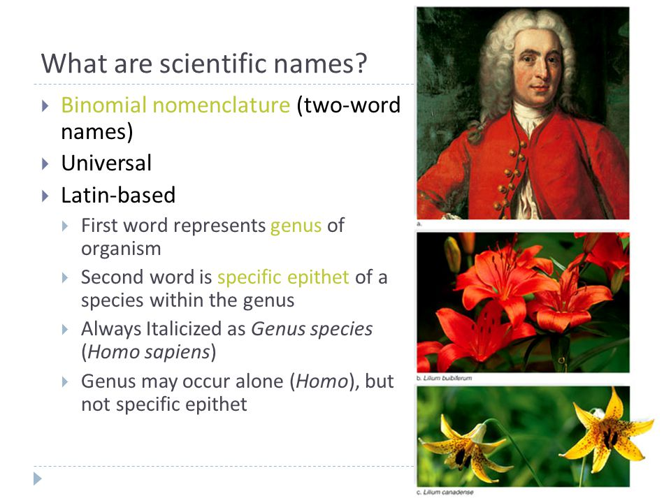 What are scientific names.