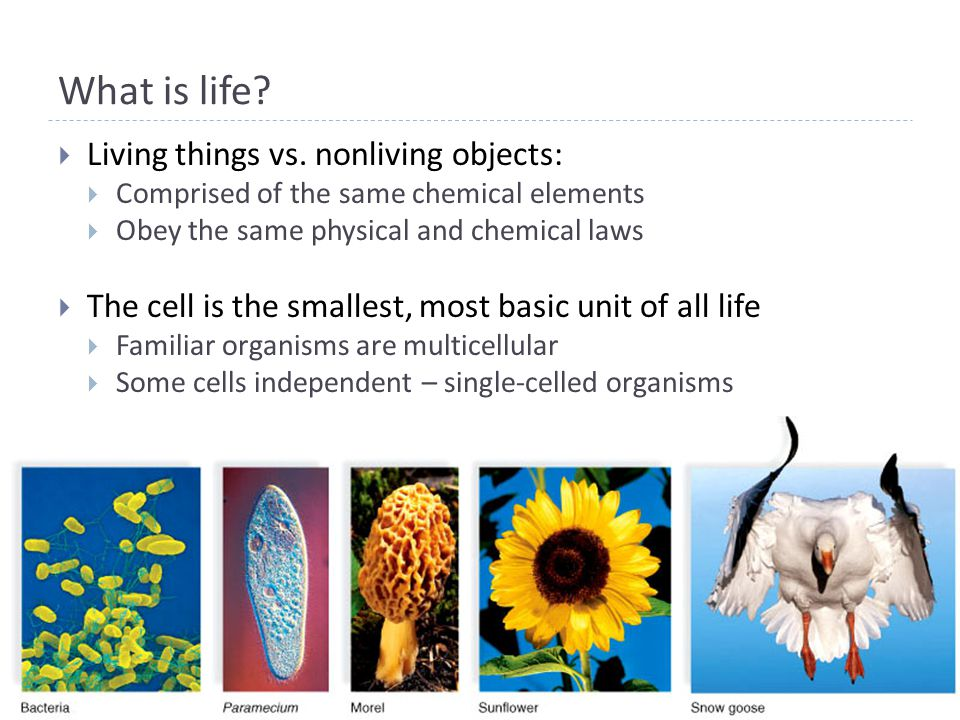 What is life.  Living things vs.