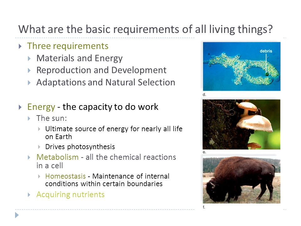 What are the basic requirements of all living things?  Three requirements  Materials and Energy  Reproduction and Development  Adaptations and Nat