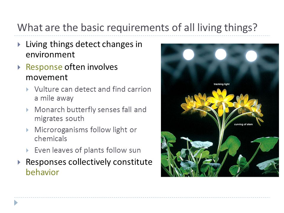 What are the basic requirements of all living things.