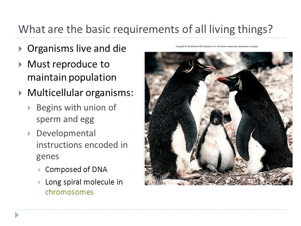 What are the basic requirements of all living things?  Organisms live and die  Must reproduce to maintain population  Multicellular organisms:  Be