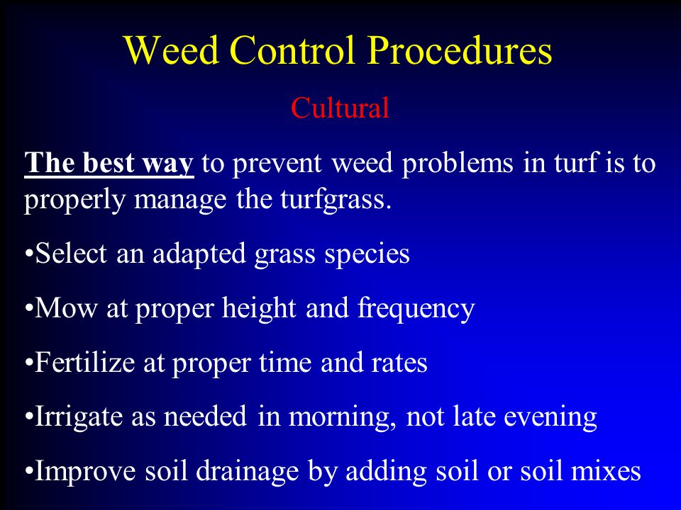 Weed Control Procedures Cultural The best way to prevent weed problems in turf is to properly manage the turfgrass.