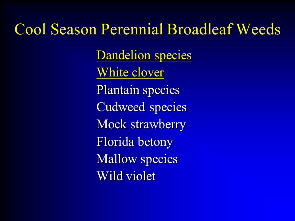Cool Season Perennial Broadleaf Weeds Dandelion species White clover Plantain species Cudweed species Mock strawberry Florida betony Mallow species Wild violet