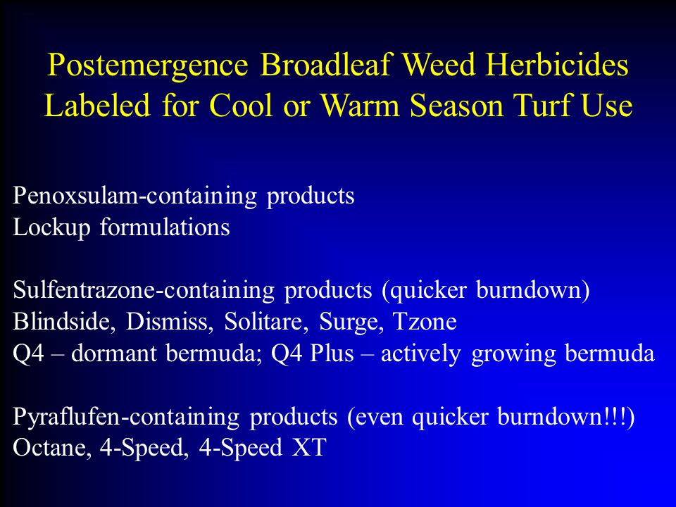 Postemergence Broadleaf Weed Herbicides Labeled for Cool or Warm Season Turf Use Penoxsulam-containing products Lockup formulations Sulfentrazone-containing products (quicker burndown) Blindside, Dismiss, Solitare, Surge, Tzone Q4 – dormant bermuda; Q4 Plus – actively growing bermuda Pyraflufen-containing products (even quicker burndown!!!) Octane, 4-Speed, 4-Speed XT