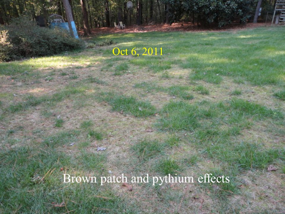 Oct 6, 2011 Brown patch and pythium effects