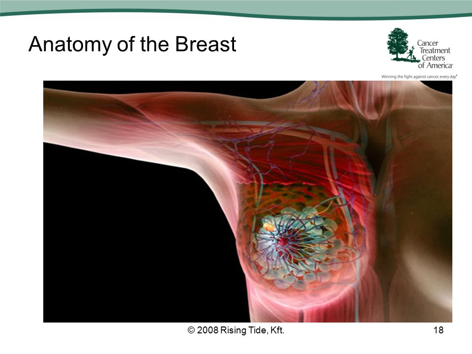 Anatomy of the Breast © 2008 Rising Tide, Kft.18