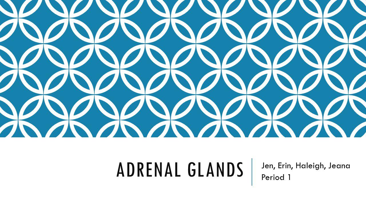 ADRENAL GLANDS Jen, Erin, Haleigh, Jeana Period 1