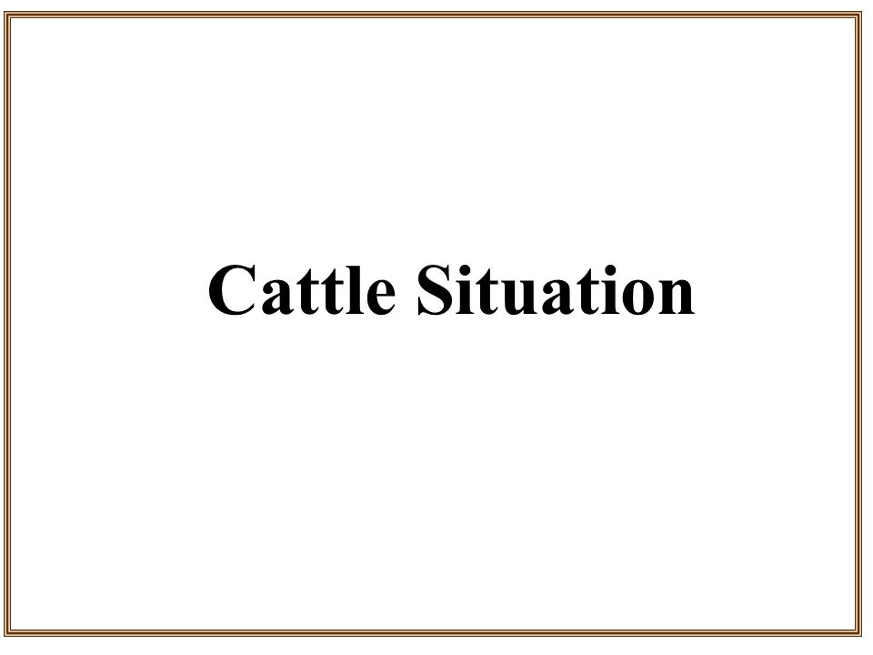 Cattle Situation