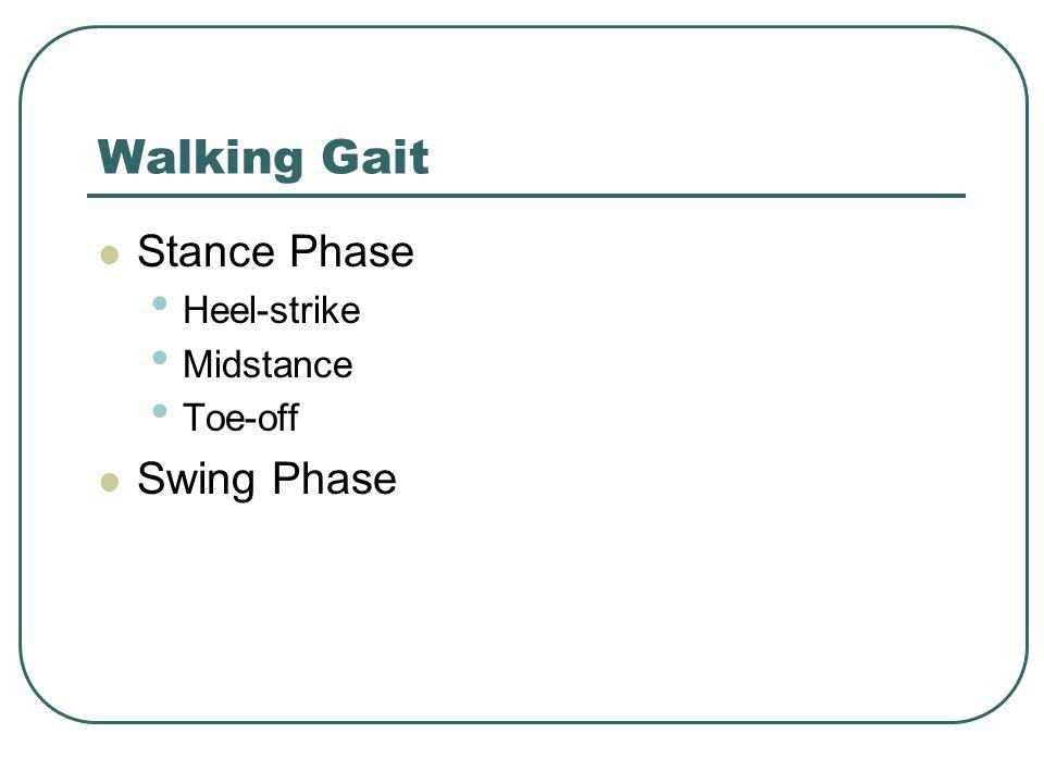 Walking Gait Stance Phase Heel-strike Midstance Toe-off Swing Phase