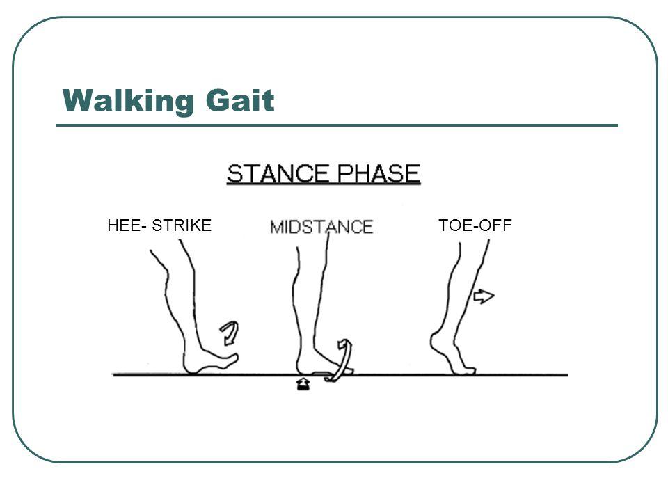 Walking Gait HEE- STRIKE TOE-OFF