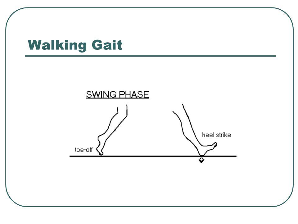 Walking Gait