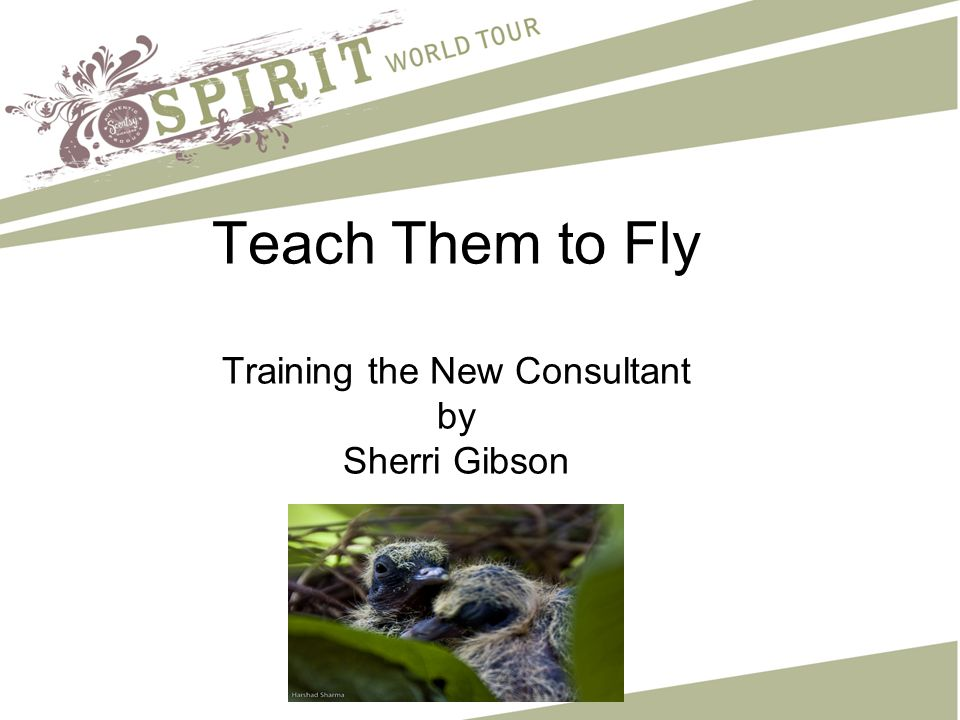 Teach Them to Fly Training the New Consultant by Sherri Gibson