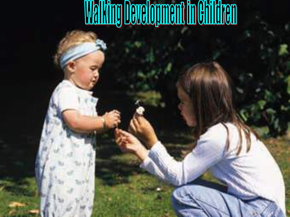 Walking development in children   Most children walk independently between 11 and 15 months of age.between 11 and 15 months of age   Mature gait pattern appears by age three, through the interaction of changes in several systems:   Neurological (P.N.S & C.N.S myelination(   Biomechanical (changes in skeletal structure, including size and mass of body parts(   Psychological (motor learning(   Environmental (amount of handling,opportunities to walk (