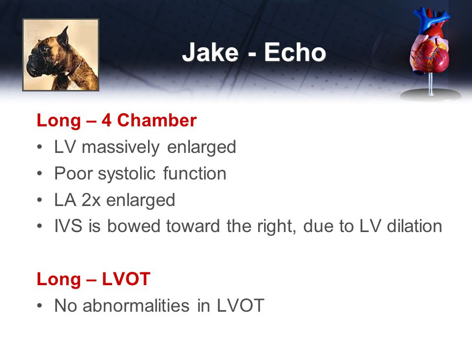 Jake - Echo Long – 4 Chamber LV massively enlarged Poor systolic function LA 2x enlarged IVS is bowed toward the right, due to LV dilation Long – LVOT No abnormalities in LVOT