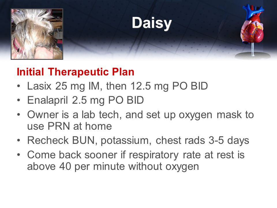 Daisy Initial Therapeutic Plan Lasix 25 mg IM, then 12.5 mg PO BID Enalapril 2.5 mg PO BID Owner is a lab tech, and set up oxygen mask to use PRN at home Recheck BUN, potassium, chest rads 3-5 days Come back sooner if respiratory rate at rest is above 40 per minute without oxygen