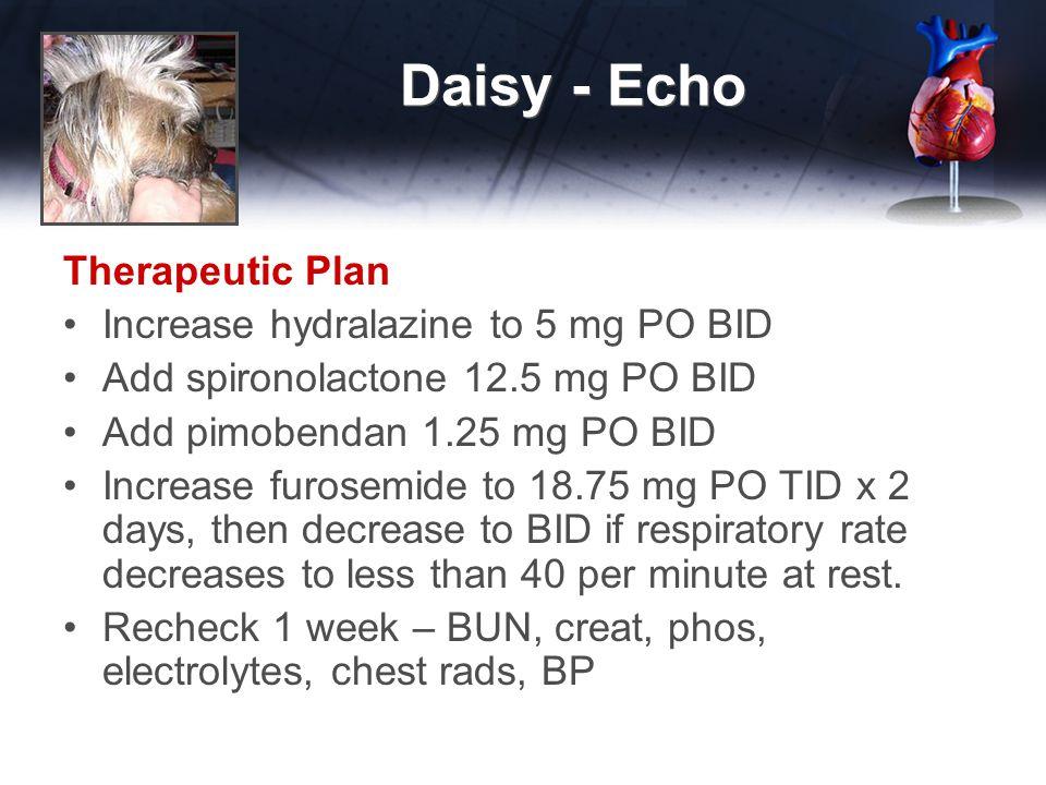 Daisy - Echo Therapeutic Plan Increase hydralazine to 5 mg PO BID Add spironolactone 12.5 mg PO BID Add pimobendan 1.25 mg PO BID Increase furosemide to 18.75 mg PO TID x 2 days, then decrease to BID if respiratory rate decreases to less than 40 per minute at rest.