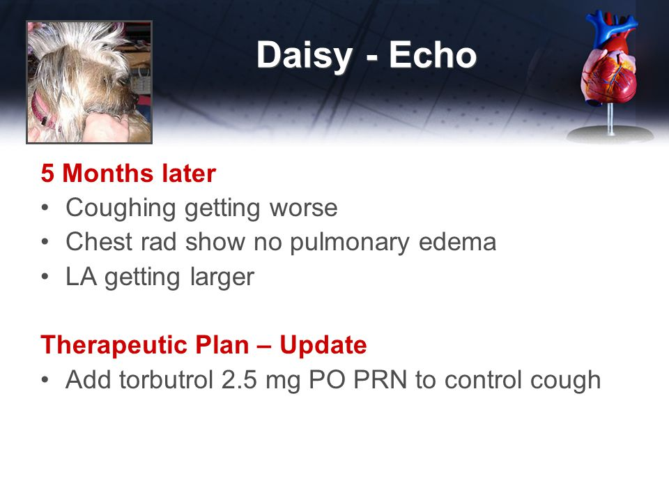 Daisy - Echo 5 Months later Coughing getting worse Chest rad show no pulmonary edema LA getting larger Therapeutic Plan – Update Add torbutrol 2.5 mg PO PRN to control cough