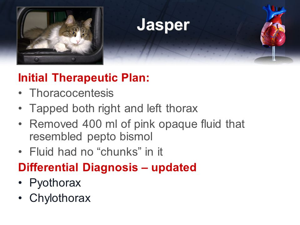 Jasper Initial Therapeutic Plan: Thoracocentesis Tapped both right and left thorax Removed 400 ml of pink opaque fluid that resembled pepto bismol Fluid had no chunks in it Differential Diagnosis – updated Pyothorax Chylothorax