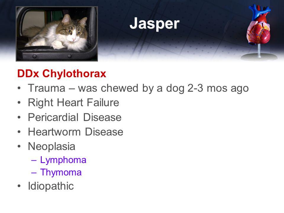 Jasper DDx Chylothorax Trauma – was chewed by a dog 2-3 mos ago Right Heart Failure Pericardial Disease Heartworm Disease Neoplasia –Lymphoma –Thymoma Idiopathic