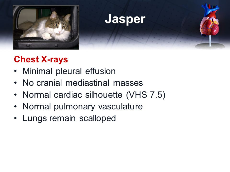 Jasper Chest X-rays Minimal pleural effusion No cranial mediastinal masses Normal cardiac silhouette (VHS 7.5) Normal pulmonary vasculature Lungs remain scalloped