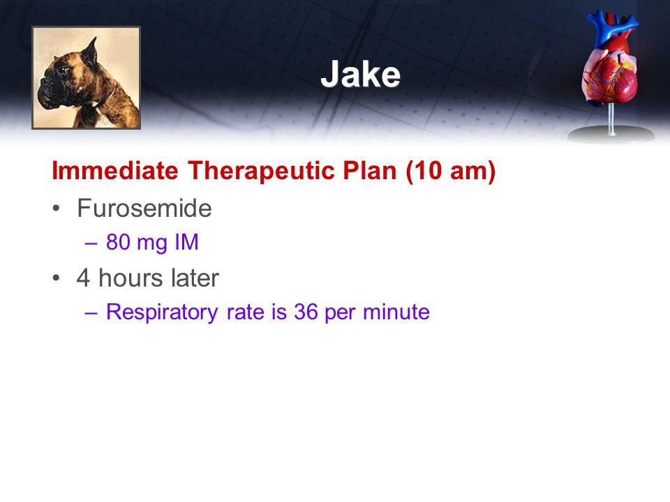 Jake Immediate Therapeutic Plan (10 am) Furosemide –80 mg IM 4 hours later –Respiratory rate is 36 per minute