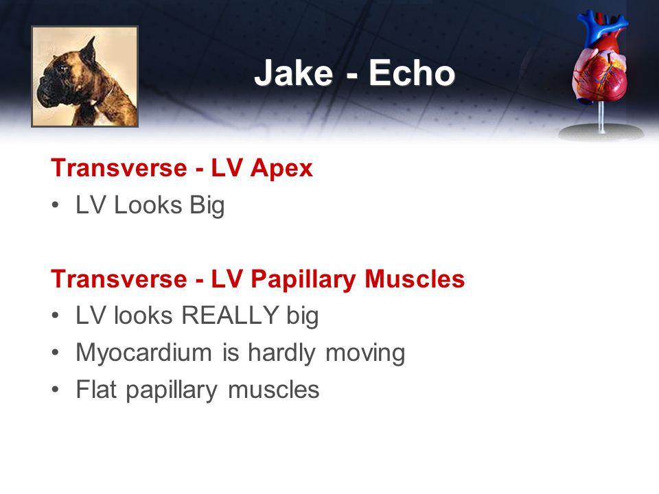 Jake - Echo Transverse - LV Apex LV Looks Big Transverse - LV Papillary Muscles LV looks REALLY big Myocardium is hardly moving Flat papillary muscles