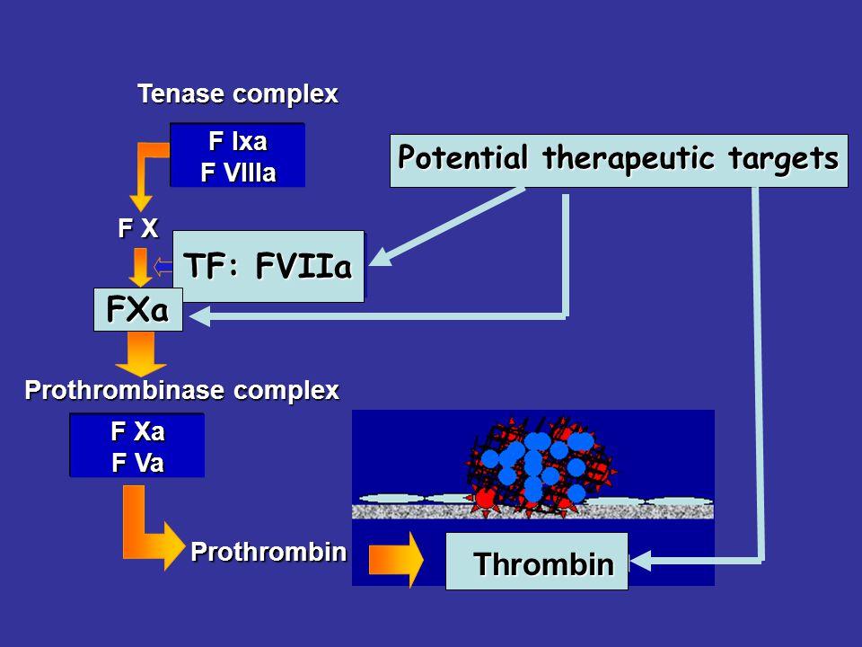 F X F Ixa F VIIIa Prothrombin F Xa Tenase complex Prothrombinase complex F Xa F Va F VIIa Tissue factor Potential therapeutic targets TF: FVIIa FXa Thrombin