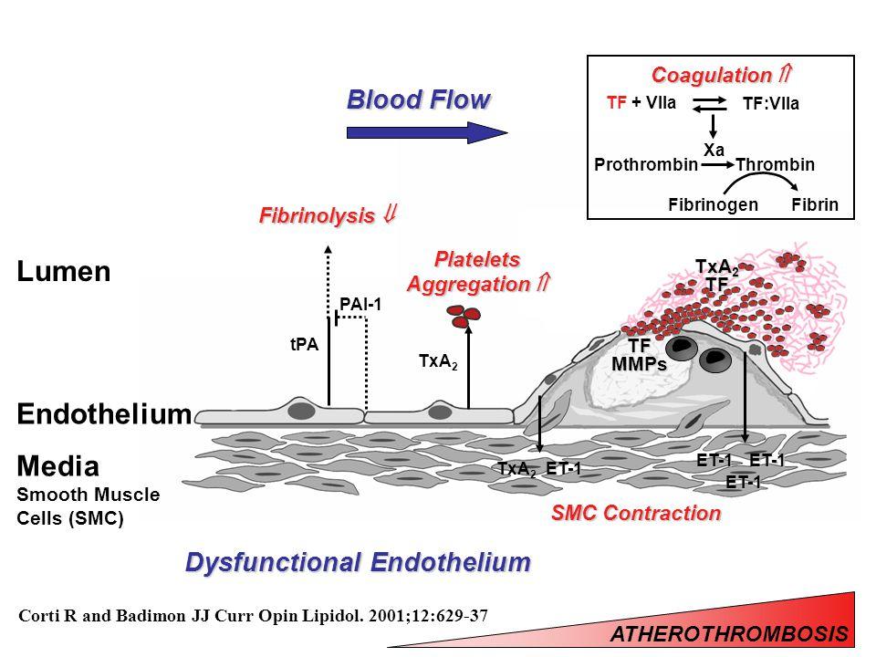 TFMMPs ET-1 SMC Contraction ET-1ET-1 ET-1 Endothelium Media Smooth Muscle Cells (SMC) Lumen TF + VIIa TF:VIIa Xa ProthrombinThrombin FibrinFibrinogen Coagulation  Blood Flow Platelets Aggregation  TxA 2 TxA 2 TF TxA 2 Dysfunctional Endothelium PAI-1 tPA Fibrinolysis  Corti R and Badimon JJ Curr Opin Lipidol.