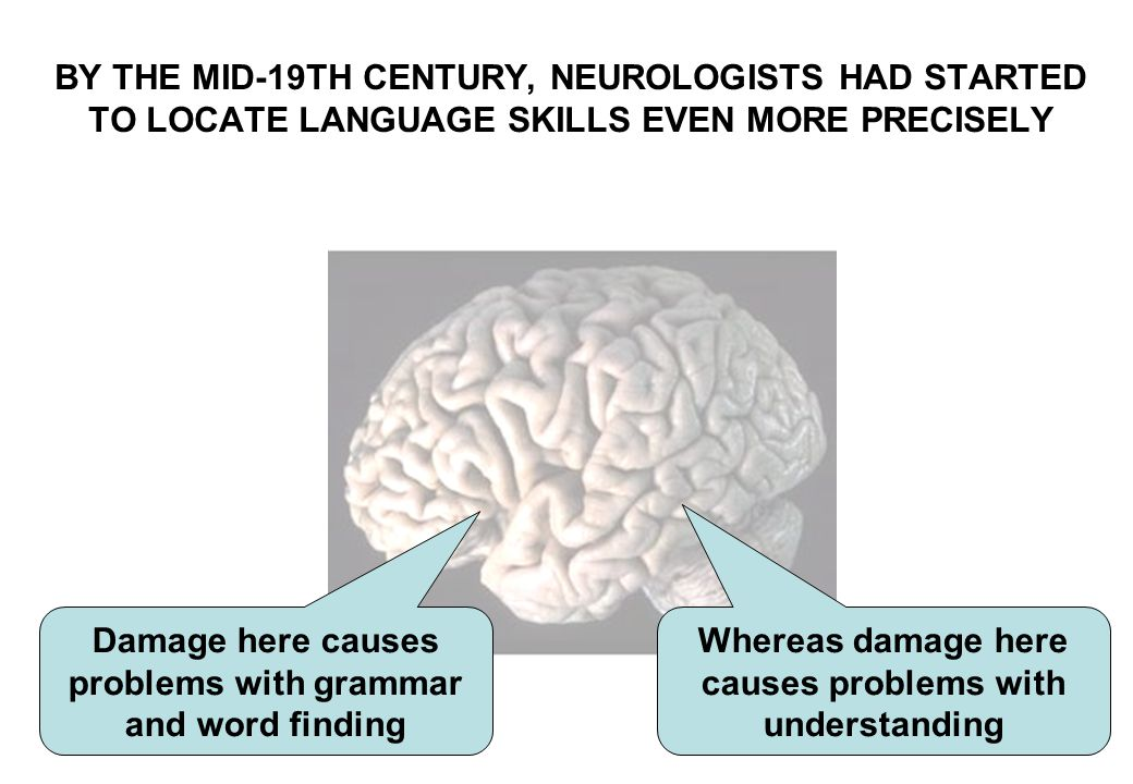 Damage here causes problems with grammar and word finding BY THE MID-19TH CENTURY, NEUROLOGISTS HAD STARTED TO LOCATE LANGUAGE SKILLS EVEN MORE PRECIS