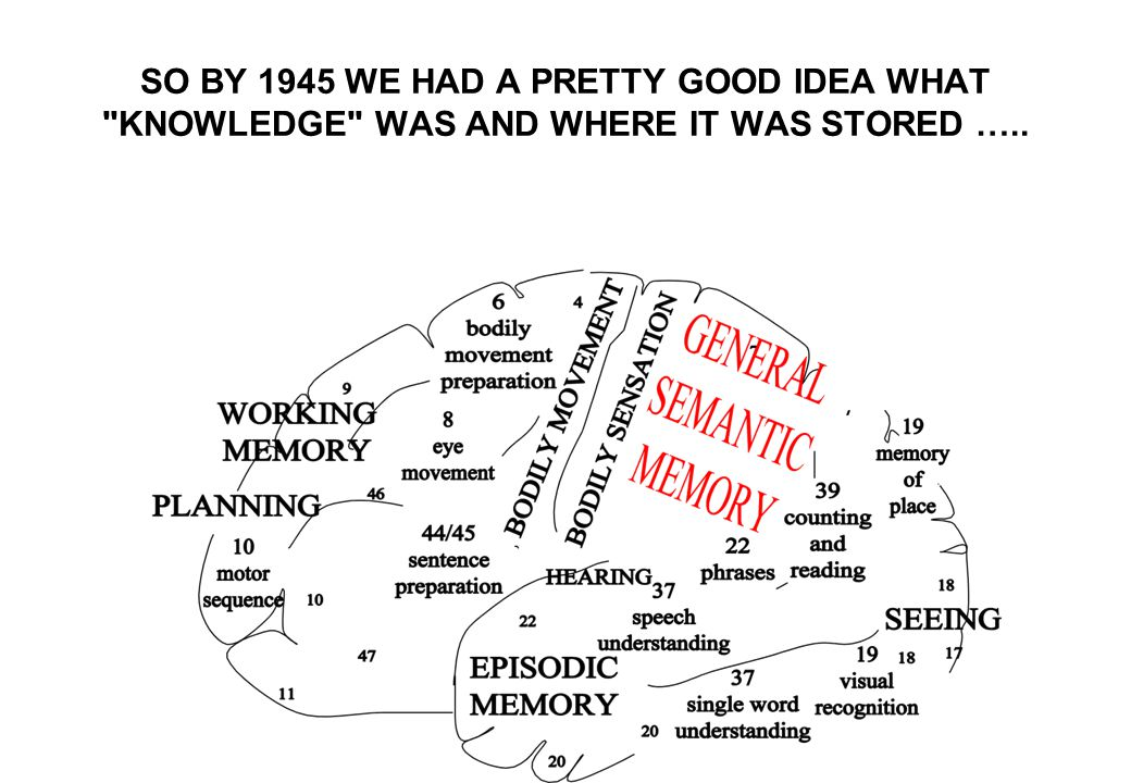 SO BY 1945 WE HAD A PRETTY GOOD IDEA WHAT KNOWLEDGE WAS AND WHERE IT WAS STORED …..