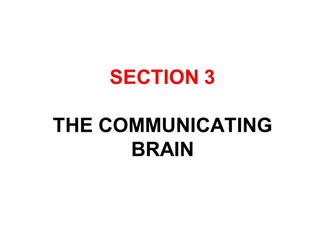SECTION 3 THE COMMUNICATING BRAIN