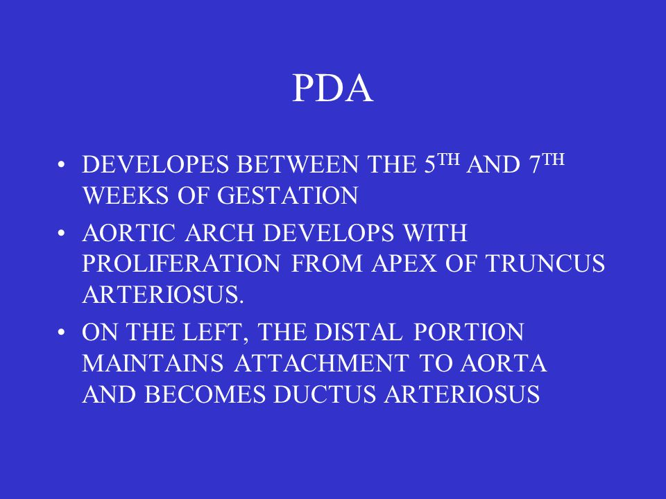 PDA DEVELOPES BETWEEN THE 5 TH AND 7 TH WEEKS OF GESTATION AORTIC ARCH DEVELOPS WITH PROLIFERATION FROM APEX OF TRUNCUS ARTERIOSUS.
