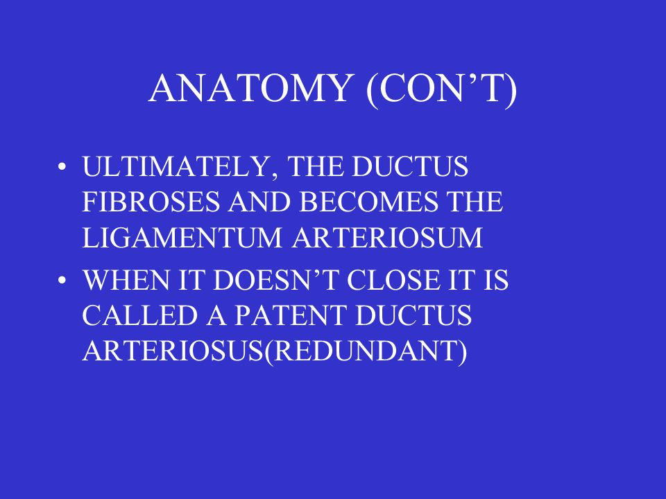 ANATOMY (CON'T) ULTIMATELY, THE DUCTUS FIBROSES AND BECOMES THE LIGAMENTUM ARTERIOSUM WHEN IT DOESN'T CLOSE IT IS CALLED A PATENT DUCTUS ARTERIOSUS(REDUNDANT)