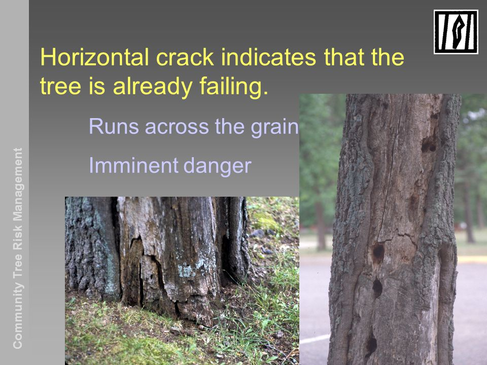 Community Tree Risk Management Horizontal crack indicates that the tree is already failing.