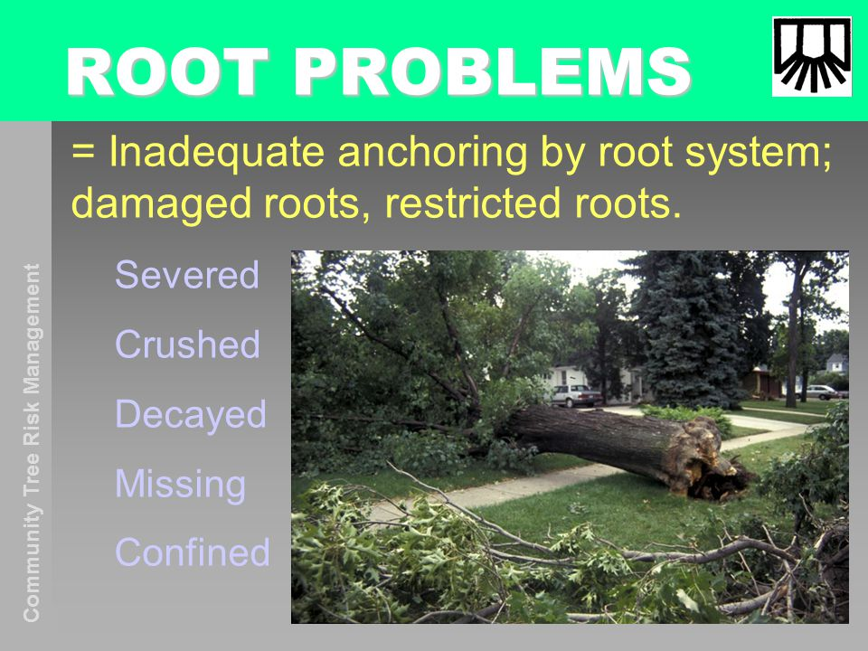Community Tree Risk Management ROOT PROBLEMS = Inadequate anchoring by root system; damaged roots, restricted roots.