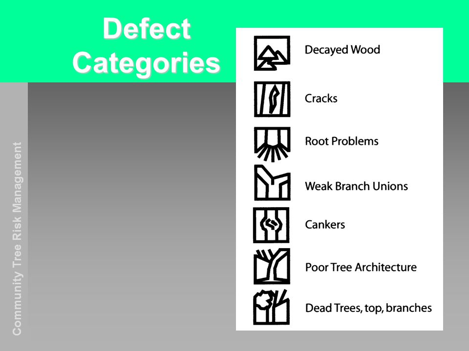 Community Tree Risk Management Defect Categories