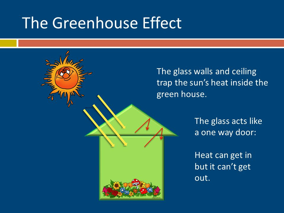 The Greenhouse Effect The glass walls and ceiling trap the sun's heat inside the green house.