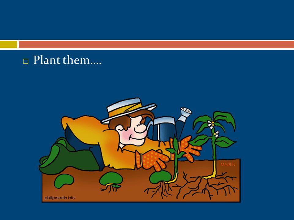  Plant them….