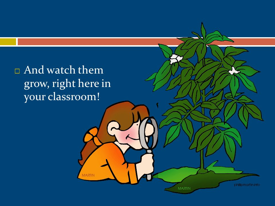  And watch them grow, right here in your classroom!