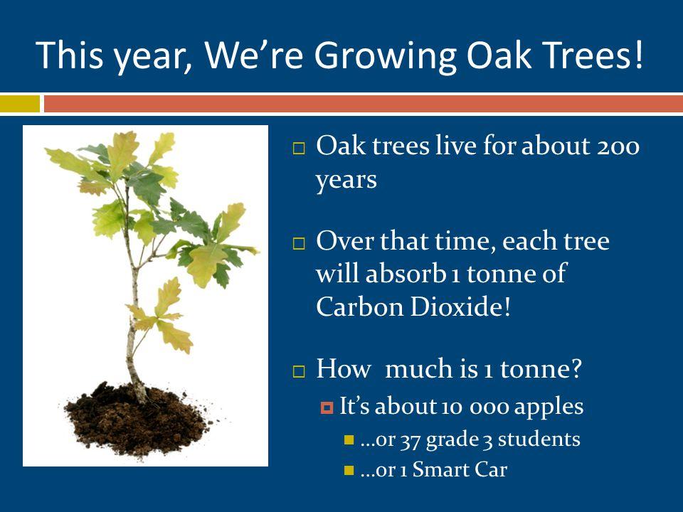 This year, We're Growing Oak Trees.