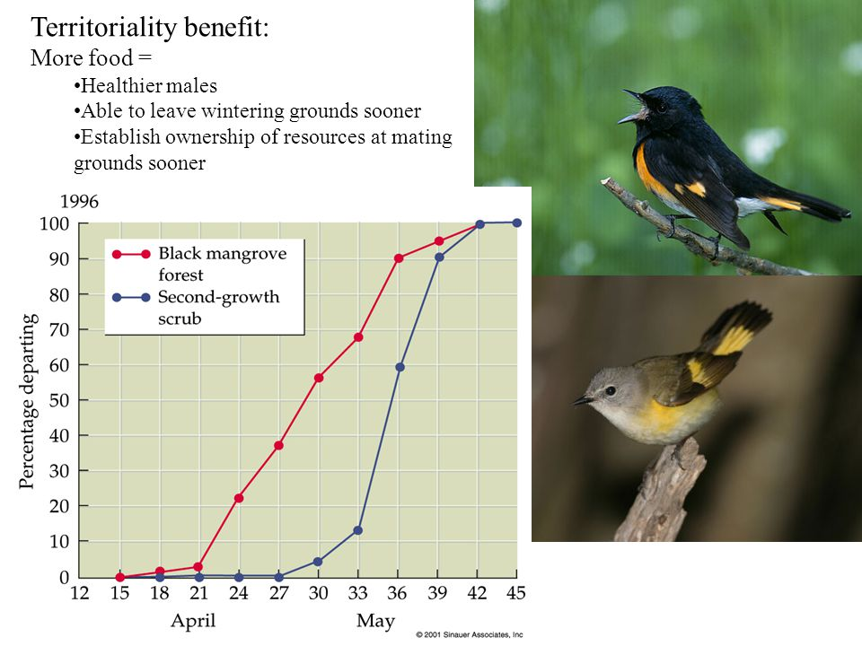 Territoriality benefit: More food = Healthier males Able to leave wintering grounds sooner Establish ownership of resources at mating grounds sooner